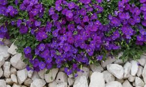 Création de jardins et jolies fleurs