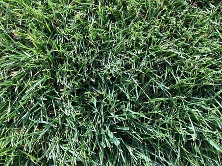grass-1